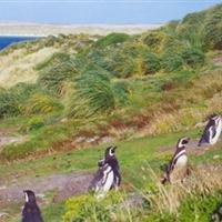 福克兰群岛 景点列表