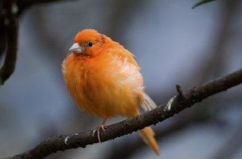 万鸟园 景点图片