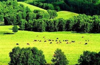 安固里草原 景点图片