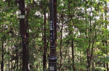 潜山国家森林公园 景点图片