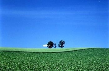 亲子之树 景点图片