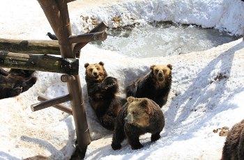 登别熊牧场 景点详情