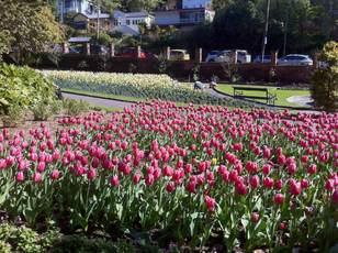 惠灵顿植物园 景点详情