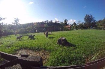 垦丁石牛溪农场 景点图片