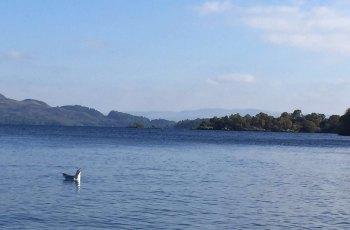 洛蒙德湖 景点图片