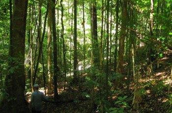 丹翠雨林 景点详情