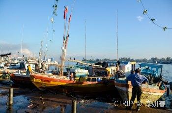 尼甘布中心鱼市场 景点详情