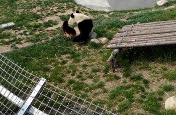 大丰港动物园 景点详情