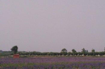 西部芳香园 景点图片