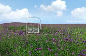 凯光新天地新余国家亚热带植物园 景点图片