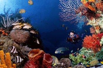 海底世界水族馆 景点详情