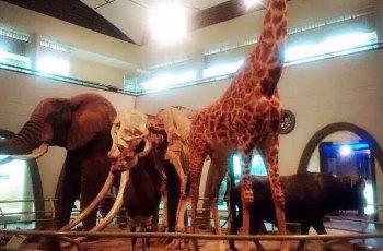 内罗毕国家博物馆 景点图片