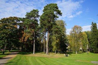 西贝柳斯公园 景点图片