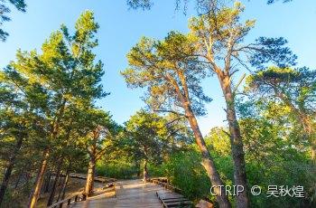 海拉尔国家森林公园 景点详情
