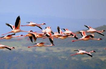 纳库鲁湖 景点图片