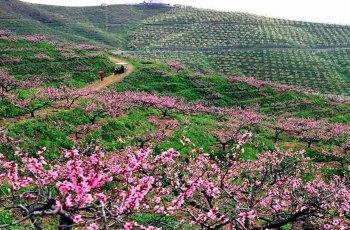 大梨树生态旅游区 景点图片