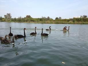 五缘湾湿地公园 景点图片