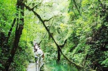 后河原始生态旅游区 景点图片
