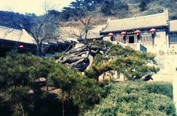 延寿寺 景点图片