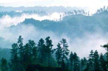 黎坪森林公园 景点详情