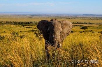 马赛马拉国家保护区 景点图片