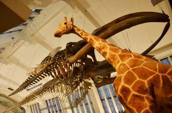 自然历史博物馆 景点详情