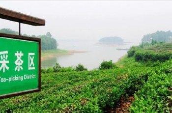 南湾湖茶岛 景点详情