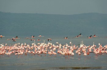 纳库鲁国家野生动物园 景点图片