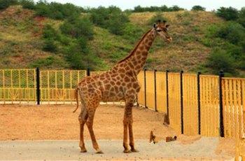 大青山野生动物园 景点详情