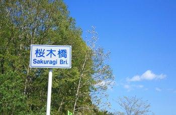 登别樱花道 景点图片