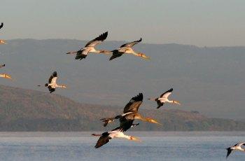 奈瓦沙湖 景点图片
