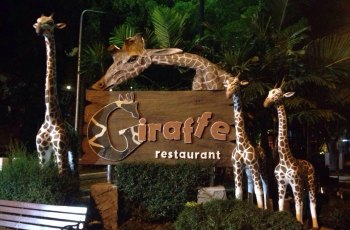 清迈夜间动物园 景点图片