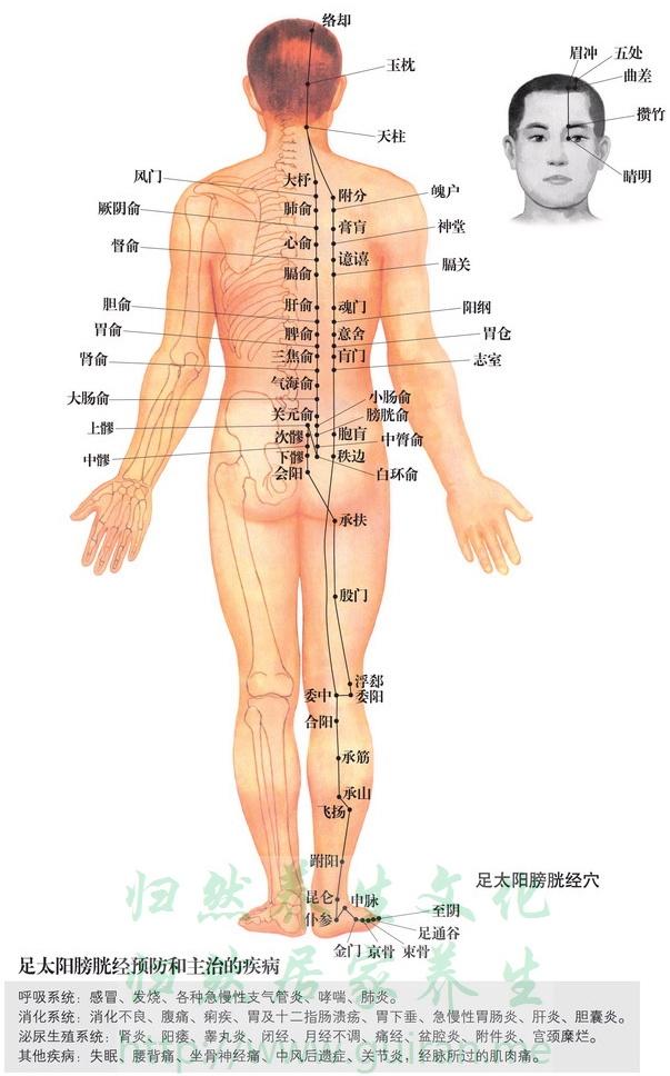 三焦俞穴 穴位图 膀胱经 穴位查询
