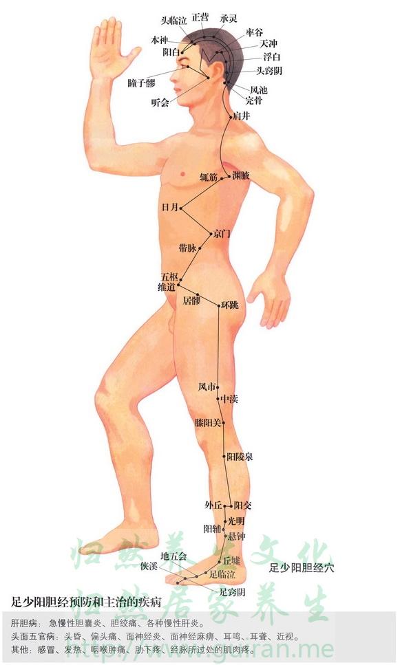 辄筋穴 穴位图 胆经 穴位查询