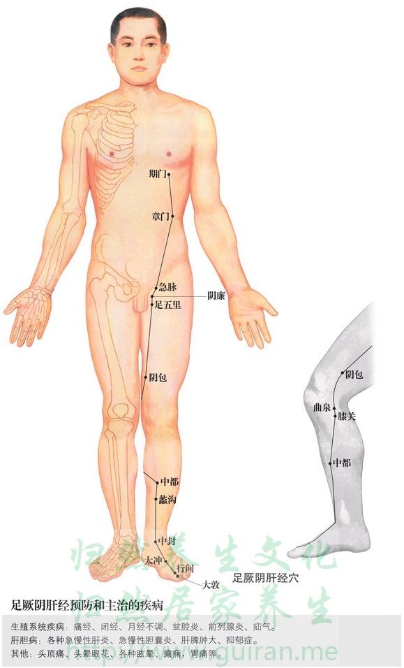 阴包穴 穴位图 肝经 穴位查询