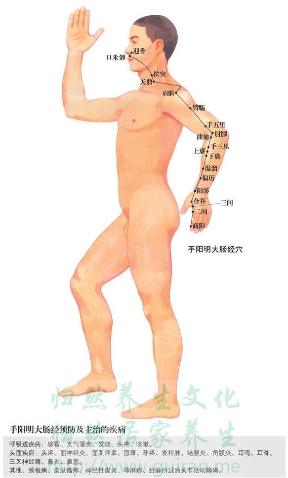 肩�k穴 穴位图 大肠经 穴位查询