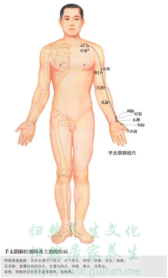 列缺穴 穴位图 肺经 穴位查询