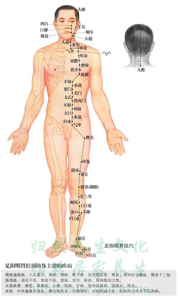 天枢穴 穴位图 胃经 穴位查询