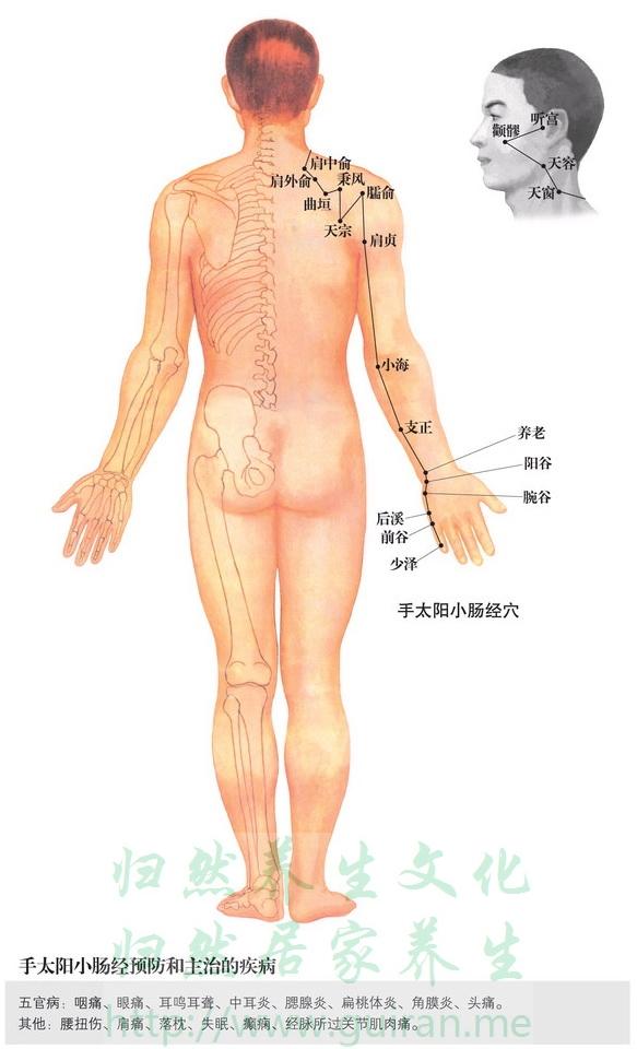 肩中俞穴 穴位图 小肠经 穴位查询