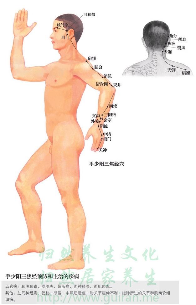 颅息穴 穴位图 三焦经 穴位查询