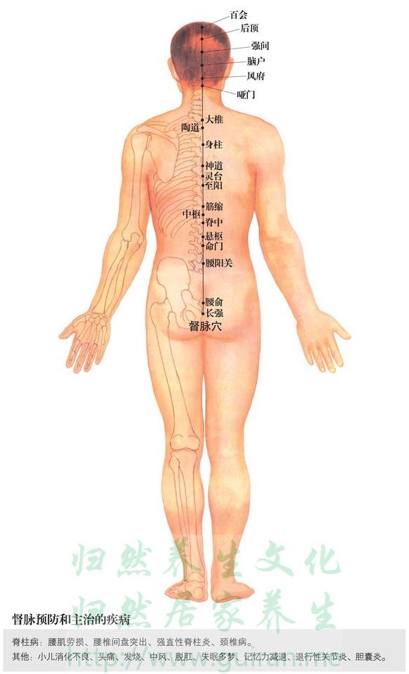 筋缩穴 穴位图 督脉 穴位查询
