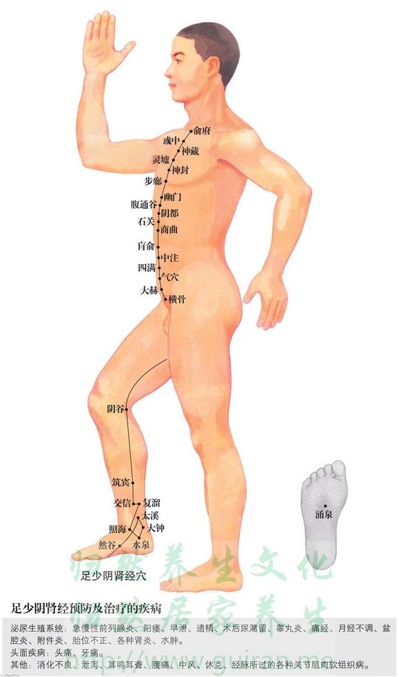 肓俞穴 穴位图 肾经 穴位查询